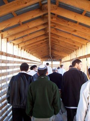 כניסת יהודים אל הר הבית דרך שער המוגרבים צילום: יעקב שוהם, 2007