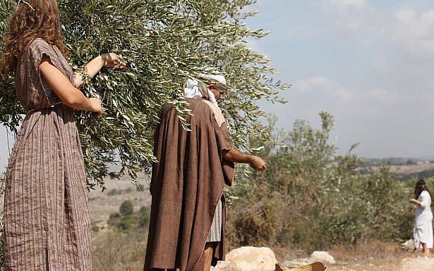 מסיק זיתים. צילום: State of Israel מתוך Flicker