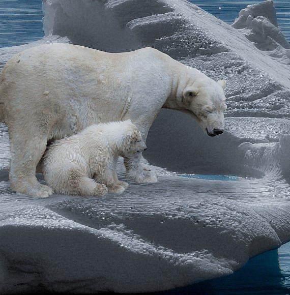 דובי קוטב עומדים על קרחון שמפשיר , צילום Pixabay